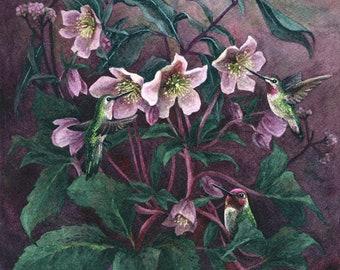Fine Art Print of Original Watercolor Painting - Hellebore Hummingbirds