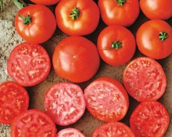 VT) MOUNTAIN SPRING Tomato~Seeds!!~~~~~~Mid-Sized Fruit!