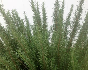 Fresh Organic Rosemary Sprigs - 3 pieces