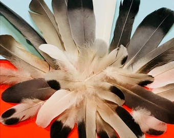 30 Selected Homing Pigeon Feathers for 6.99