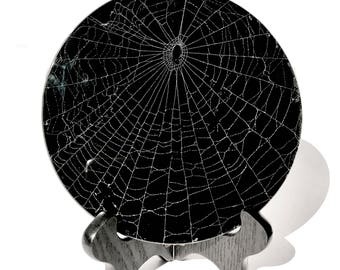 "Real Spider Web Preserved in 6"" Beveled Glass"