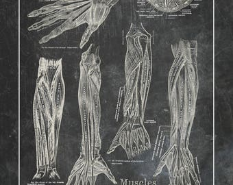 Print On Demand Grays Anatomy Muscles of the Hand Sand Charcoal Black Physical Therapy Massage Therapist Gift 11x14