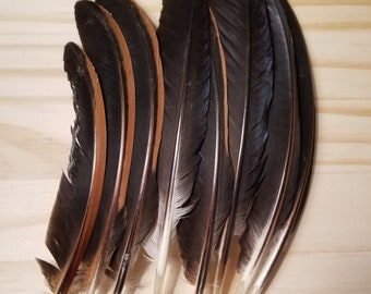 Chicken Feathers Cruelty Free Humane Naturally Molted Real Feathers #b78