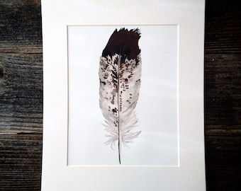 Watercolor Eagle Feather Print