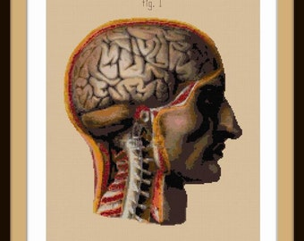 This is Your Brain Anatomical Cut-Away View cross stitch pattern pdf