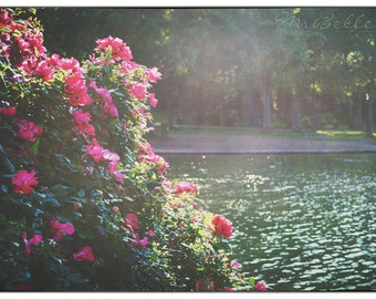 Nature Photography - Lakeside Roses - 10 x 14 fine art print - red roses lake cottage wall art home decor