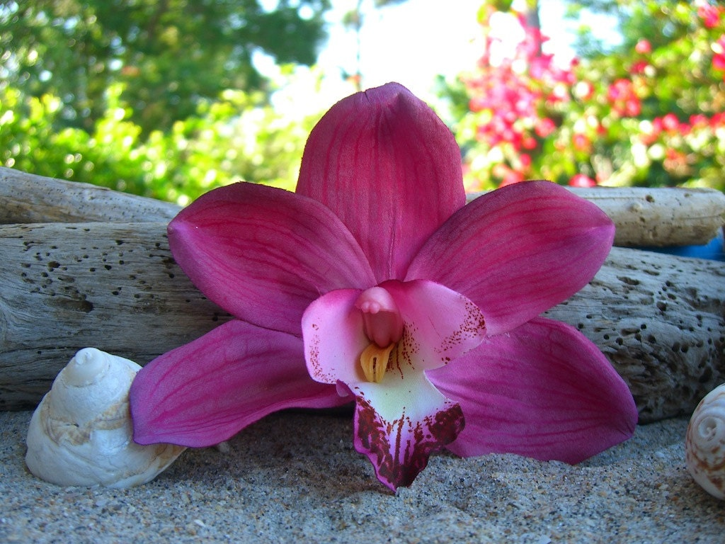 Tropical Flower Hair Clip Yb65 Advancedmassagebysara