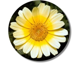 Yellow Daisy Flower Round Mousepad