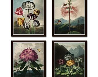 Botanical Print Set No. 15, Antique Botanical Prints, Giclee, Art Print, Botanical Prints, Wall Art, Print, Cottage Decor, Botanical Art