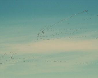 Birds flying print, birds flying canvas, birds flying south, Canada geese photo, bird art, bird canvas, oversized print, oversized art