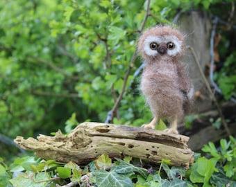 Owlet on a log