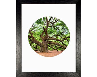 Tree, Tree Art, Landscape, Nature Photography, Botanical Art, Charleston, Nature Art, Oak Tree, Live Oak Tree, Printable, Digital Download