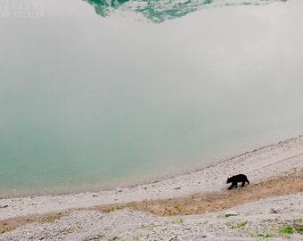 BEAR photography print, Rocky Mountains Canada, 8x12