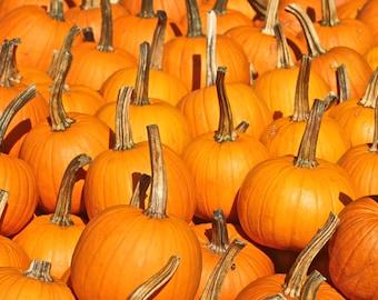 Orange Pumpkin Art Print, Farmers Market Food Photography Autumn Decor Wall Art Wall Decor Gourds Halloween Fall