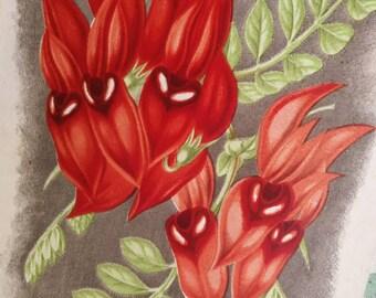 French Antique Botanical Print, Antique Floral Illustration, Victorian Antique Ephemera, Antique Plant Illustration, Antique Colour Plate