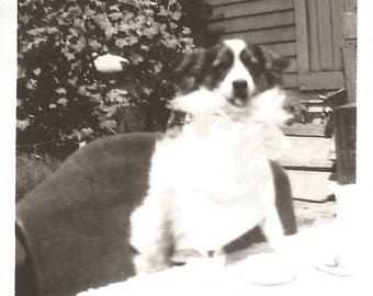 """Vintage Snapshot """"Dottie's Birthday Party"""" Cute Puppy Dog Found Vernacular Photo"""