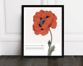 Red Poppy Art / Printable Botanical / Red Poppy Wall Art / Instant Download Art / Poppy Art Print / Vintage Red Poppy / Botanical Wall Art