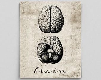 Brain Print Vintage Brain Poster Human Anatomy Poster Anatomy Art Anatomy Print Graduation Gifts for Doctors Science Art Science Poster