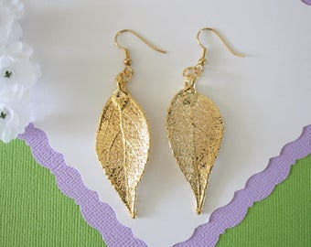 Gold Leaf Earrings, Evergreen Leaf , Real Leaf Earrings, Real Gold Evergreen Leaf, Gold, Nature, LEP58