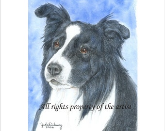"""Border Collie Reproduction Print """"Buster"""" by Jude Delaney"""