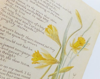 Daffodils Picture, Spring flowers Botanical Illustration, vintage botanical flower illustration, springtime, daffodils