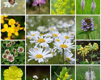 Wildflower seeds - Traditional Meadow Mix - 2g