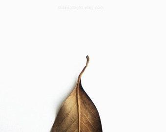 Hiver série N2. 8 x 10. tirage d'Art photographique. Minime. Accessoires décoration naturelles. Intérieur jardin botanique.