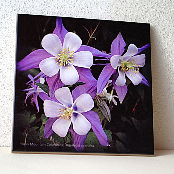 Columbine Floral And Gifts: Columbine Ceramic Tile Floral Trivet Photo All Occasion