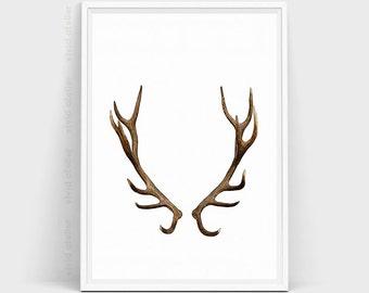Deer Antlers ...