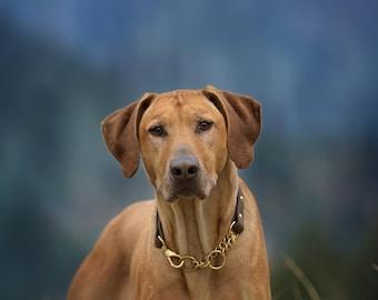 Martingale Dog Collar, Waterproof, Denali Collection, Biothane, No Choke, Adventure-proof, Dirt Resistant