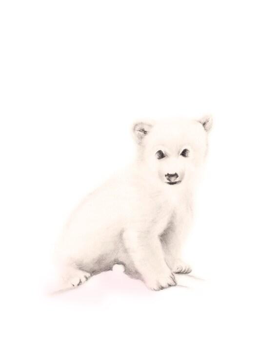 Arctic Polar Bear Drawing