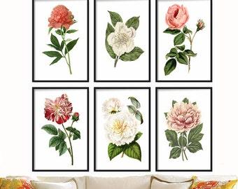 Botanical Print Set of 6 - Vintage Art Prints Set - Botanical Print Vintage Pink White - Wall Art Print -  Botanical Illustration - Wall Art