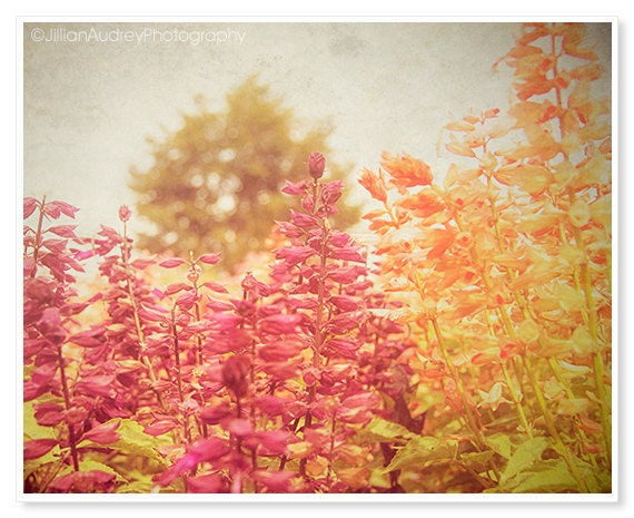 Autumn Flower Photography Nature Tangerine