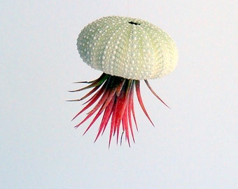 Hanging Sea Urchin Planter Single Kit