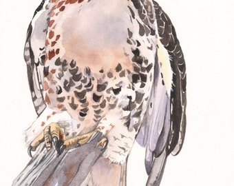 Red Tailed Hawk Watercolor painting - Print of watercolor painting- RTH7815 - 5 by 7 print wall art print - bird art - art print - wildlife