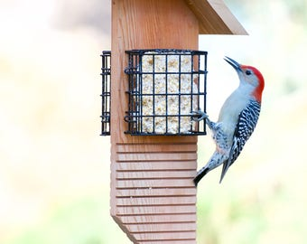 """Suet food feeder 2 cages """"Tail Prop"""""""