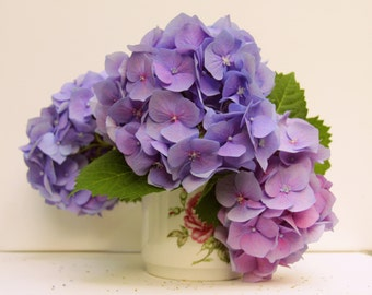still life with flowers, botanical photography, Photo purple hydrangea, picture of  hydrangea decor Wall, decor flowers room, spring flowers