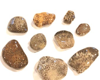 Lot of Fossilized coral