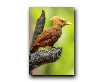 Woodpecker Print, Woodpecker Photo, Woodpecker Image, Bird Picture, Bird Photography, Bird Art, Bird Print, Wild Bird, Woody Woodpecker