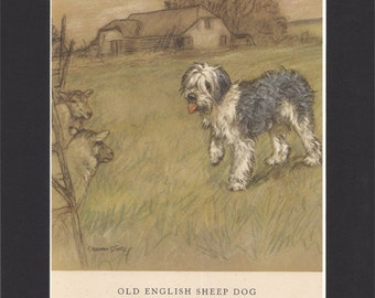 Old English Sheepdog Vintage Dog Print George Vernon Stokes  1947 Bookplate Drawing Mounted with Black Mat Old English Sheepdog Print