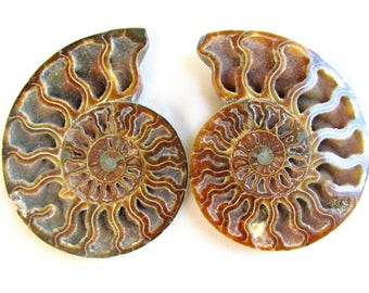 """LARGE Ammonite Fossil Pair with Druzy Crystals and Opalescent Features on Back 5.25"""""""
