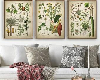 BOTANICAL Print Set of 3, Botanical Set, flower print set of medicinal plants, botanical poster, botanical wall decor, Aloe, cocoa, Nutmeg