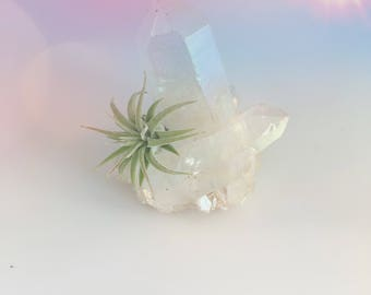 White Angel Aura Quartz Air Plant Crystal Garden
