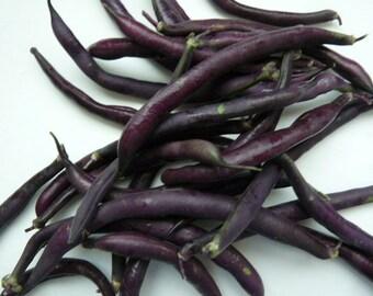 Purple Podded Pole Beans // Blauhilde Heirloom Bean Seeds