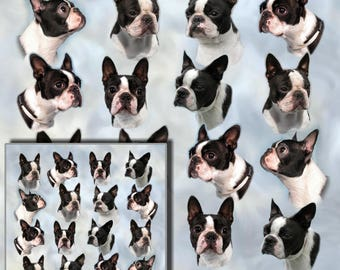 Boston Terrier Dog Gift Wrapping Paper with matching Gift Card