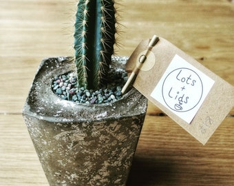 Hand crafted concrete plant pot (Ideal for cacti)