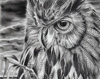 Long Eared Owl in a Storm Original A4 Pencil Portrait by Karena Higton