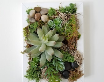 The Ethereal - Faux Succulent and Moss Framed Botanical Art