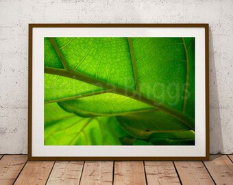 Plant Wall Art, Plant Wall, Plant Wall Decor, Plant Wall Hanging, Plant Prints, Plant Photography, Plant Art, Plant Decor, Plant Gift, Plant