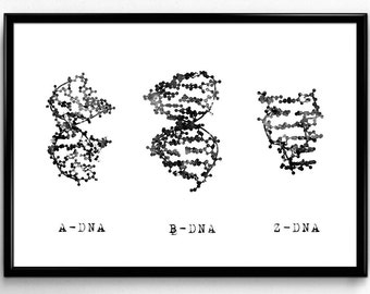 A-,B-, and Z-Dna, Science, Biology, Black and White Watercolor, Poster, Room Decor, Printable Wall Art (335)